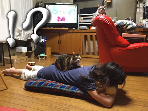 20190915_動物たち3