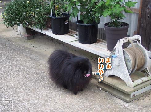 20190918_真熊と志熊6