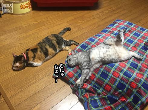 20190921_猫たち4