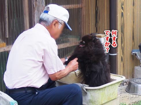 20190926_足ふき真熊6