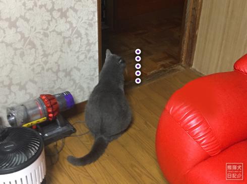 20190928_動物たち9