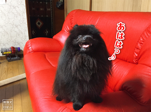 20190929_真熊&寿喜7