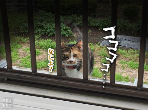 20191004_嫁女房派7
