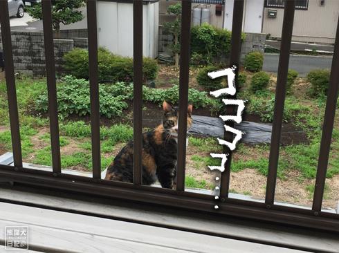 20191004_嫁女房派3