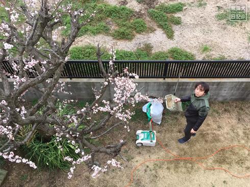 20191005_梅の木と芝刈り8