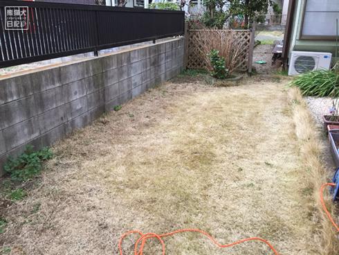 20191005_梅の木と芝刈り5