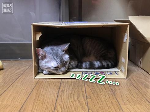20191018_おやすみ猫7
