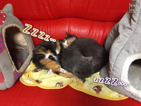 20191018_おやすみ猫5