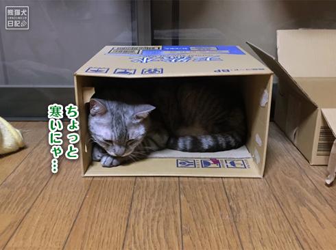 20191018_おやすみ猫4
