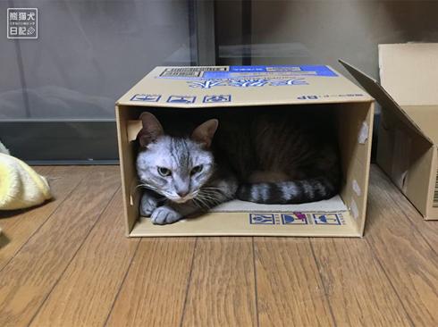20191018_おやすみ猫3