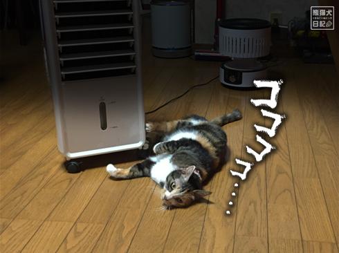 20191024_だらけ猫5