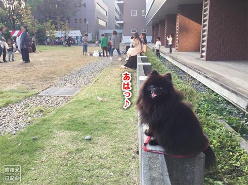 20191029_おあずけ真熊7