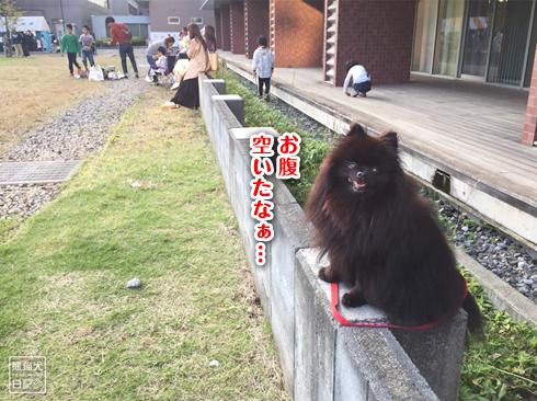 20191029_おあずけ真熊6