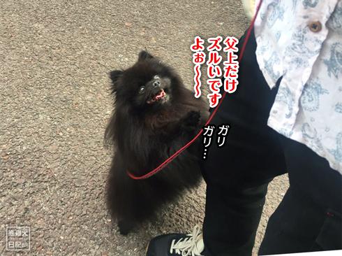 20191029_おあずけ真熊4