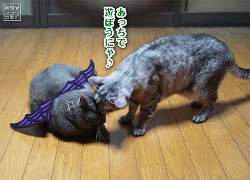 20191031_ハロウィン猫9