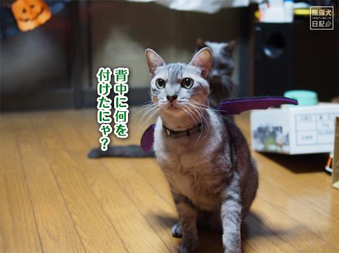 20191031_ハロウィン猫4