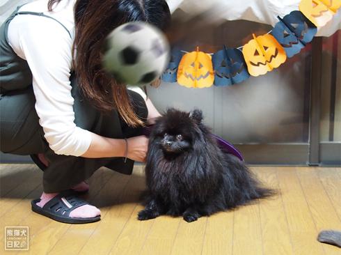 20191031_ハロウィン猫1