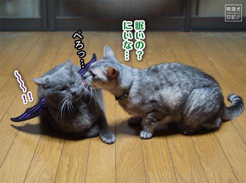 20191031_ハロウィン猫10