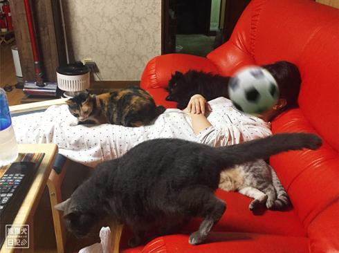 20191103_ぐうたら動物7