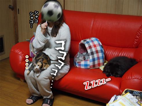 20191103_ぐうたら動物4