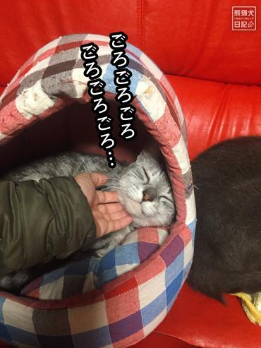 20191112_悩みなし猫7