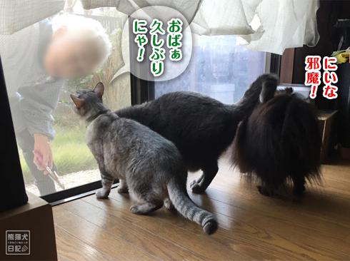 20191124_お婆ちゃん3