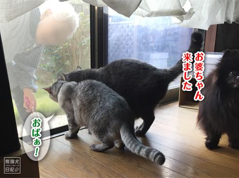 20191124_お婆ちゃん2