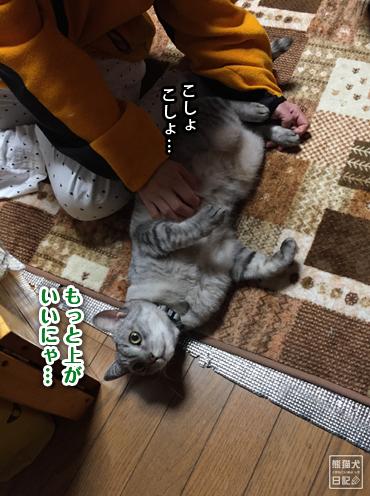 20191128_真熊3