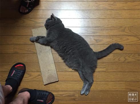 20191130_石像猫6
