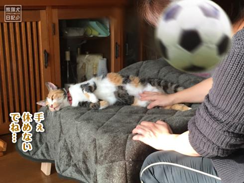 20200114_ひょっこり猫6