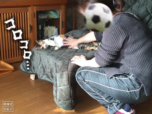 20200114_ひょっこり猫5