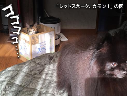 20200114_ひょっこり猫3