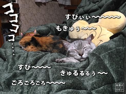 20200208₋猫だんご7