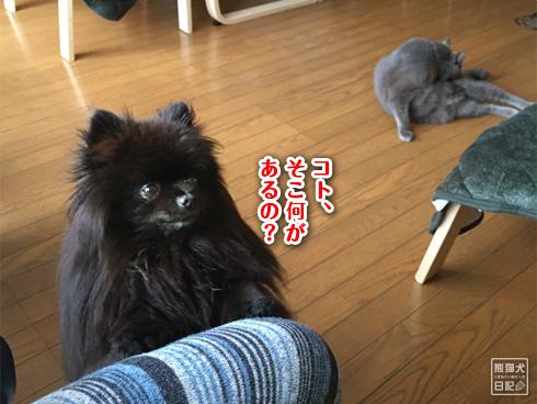 20200216_いくら丼騒動5