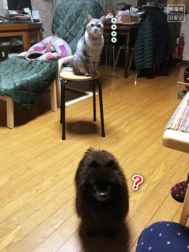 20200301_すき焼きと猫6