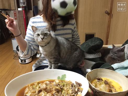20200301_すき焼きと猫1