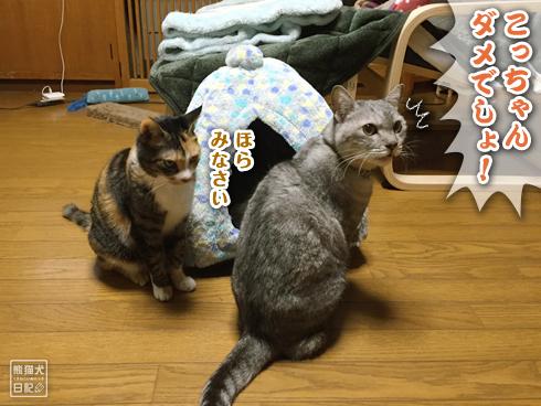 20200315_かまくら争奪戦4