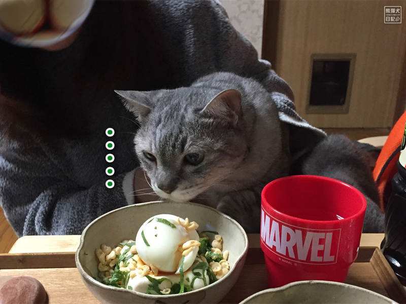 監視猫・寿喜