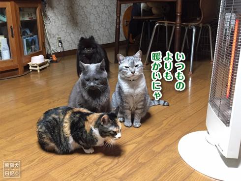 電気ストーブと猫