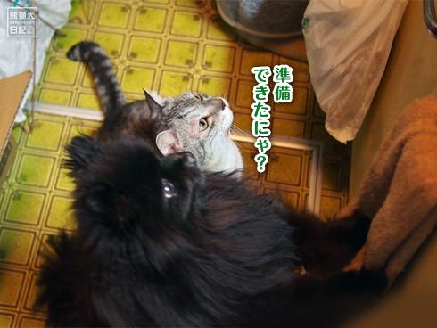 ポメラニアン真熊&猫たち