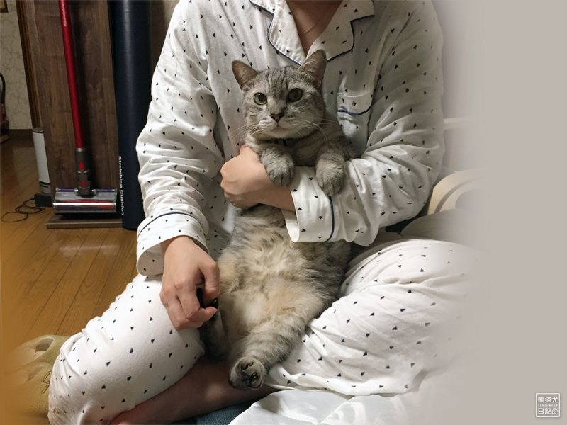 天然猫・寿喜