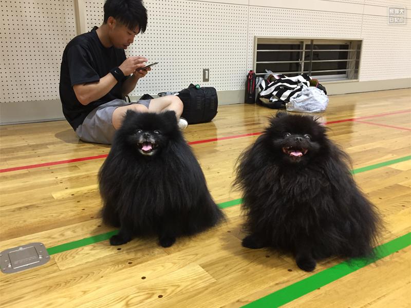 ポメラニアン志熊&真熊