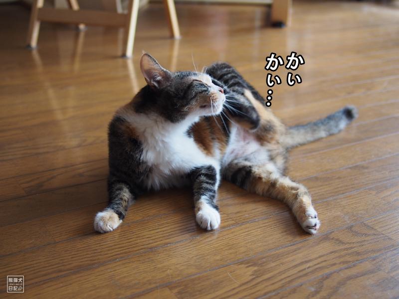 ツンデレ三毛猫・稚葉