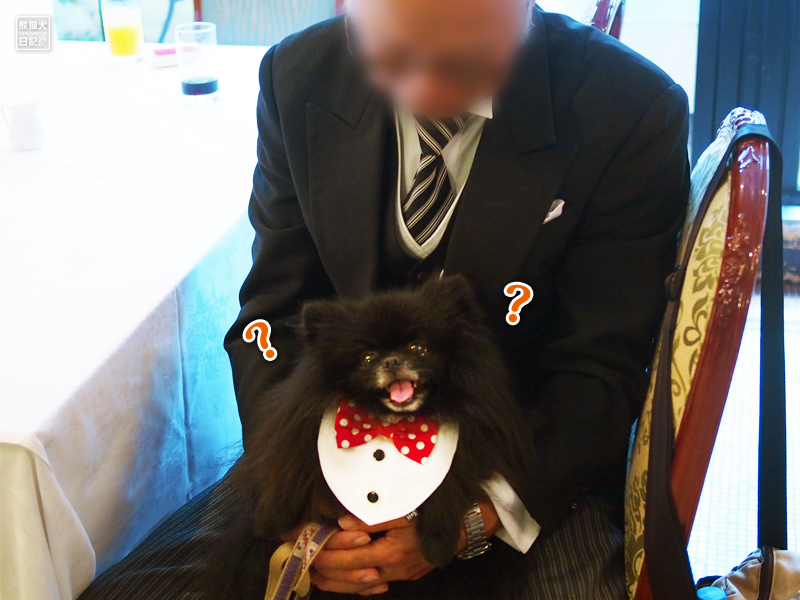 ポメラニアン志熊