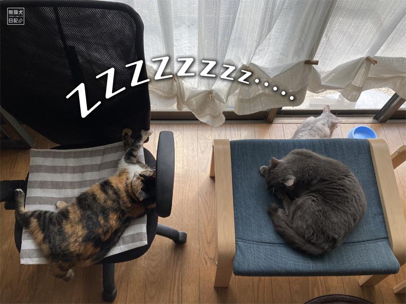 保護猫たち