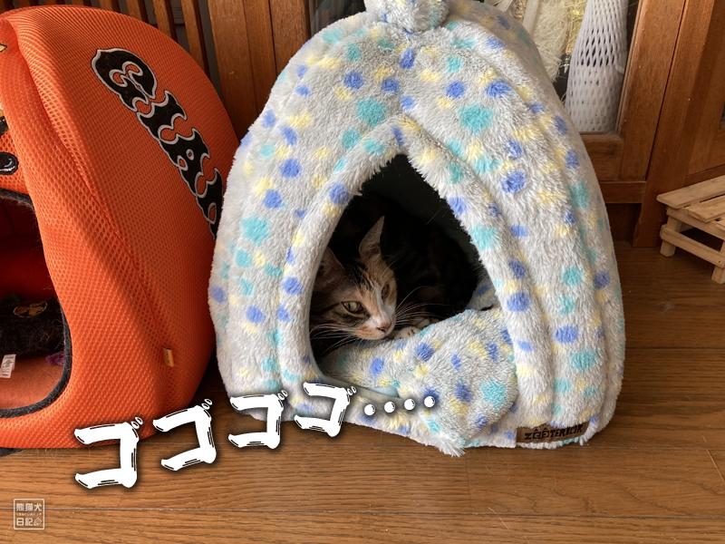 三毛猫・稚葉