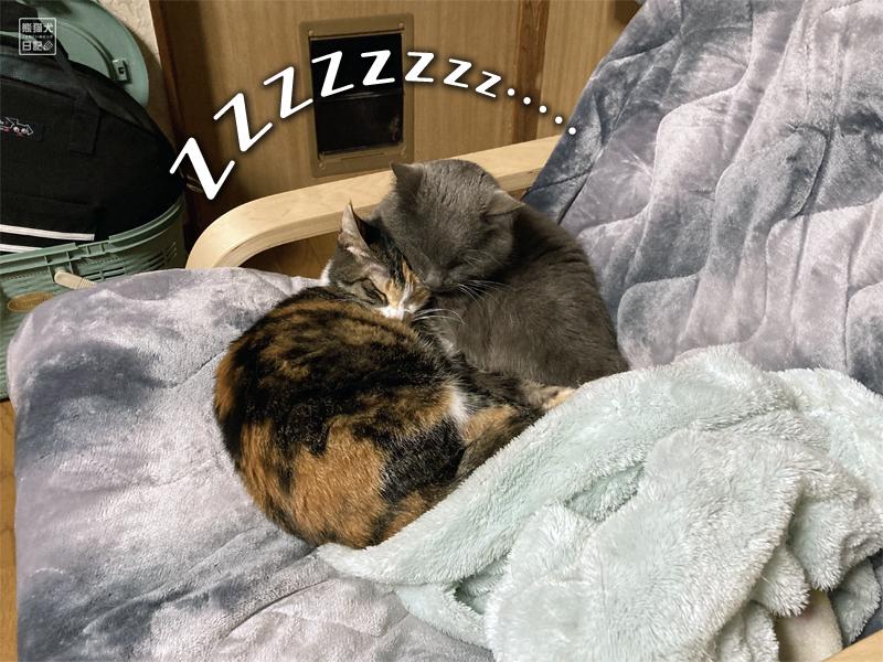 三毛猫&石像猫