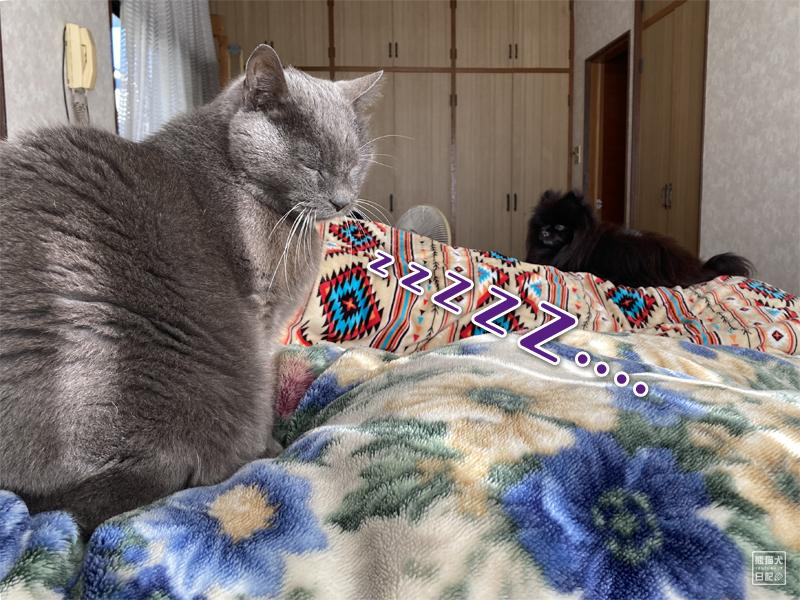 石像猫にいな