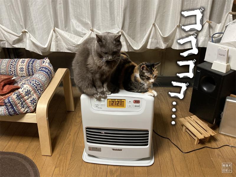 石像猫とツンデレ三毛猫