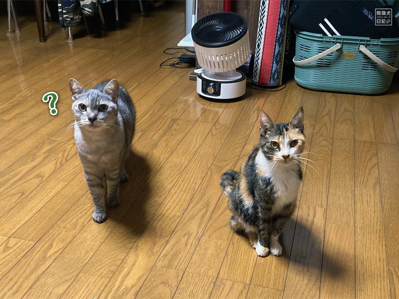 三毛猫の稚葉と寿喜